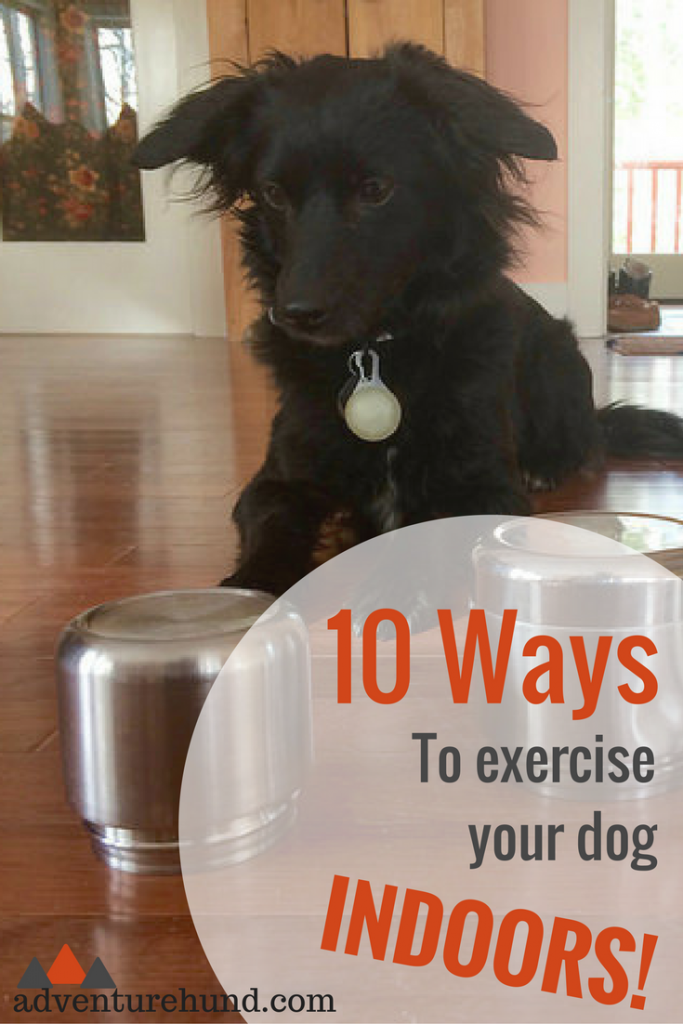 10 Ways to Exercise Your Dog Indoors