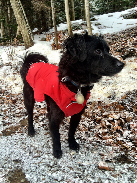 Keep your dog warm this winter with a plush puffy jacket.