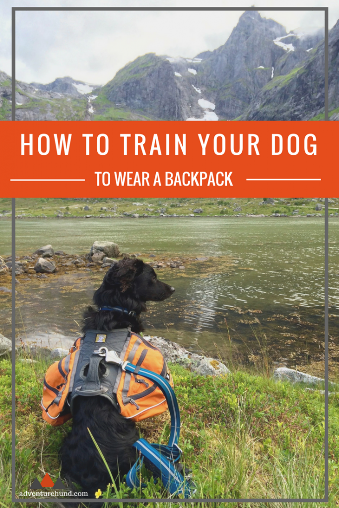 Learn how to make your dog love wearing their backpack!