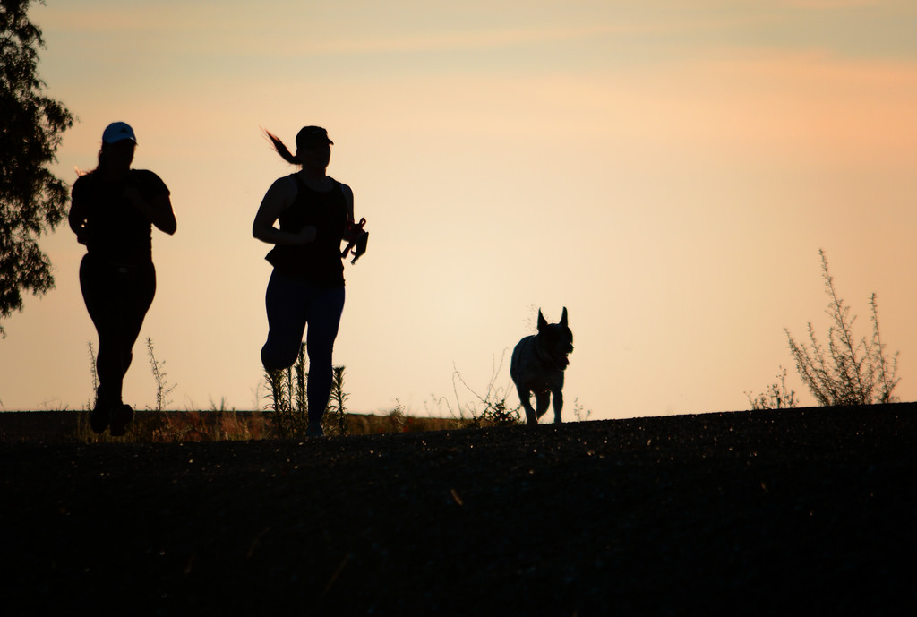 New to running with your dog? Learn how to train them to run by your side!